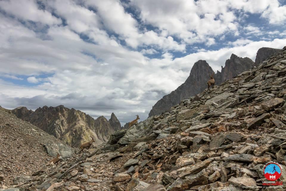10405237 809824159057204 3191021470392104503 n - ECHAPPEE BELLE-HELLY HANSEN 2014 : l'interview exclusive du vainqueur Sangé Sherpa (Alexandre Garin), résultats et photos.