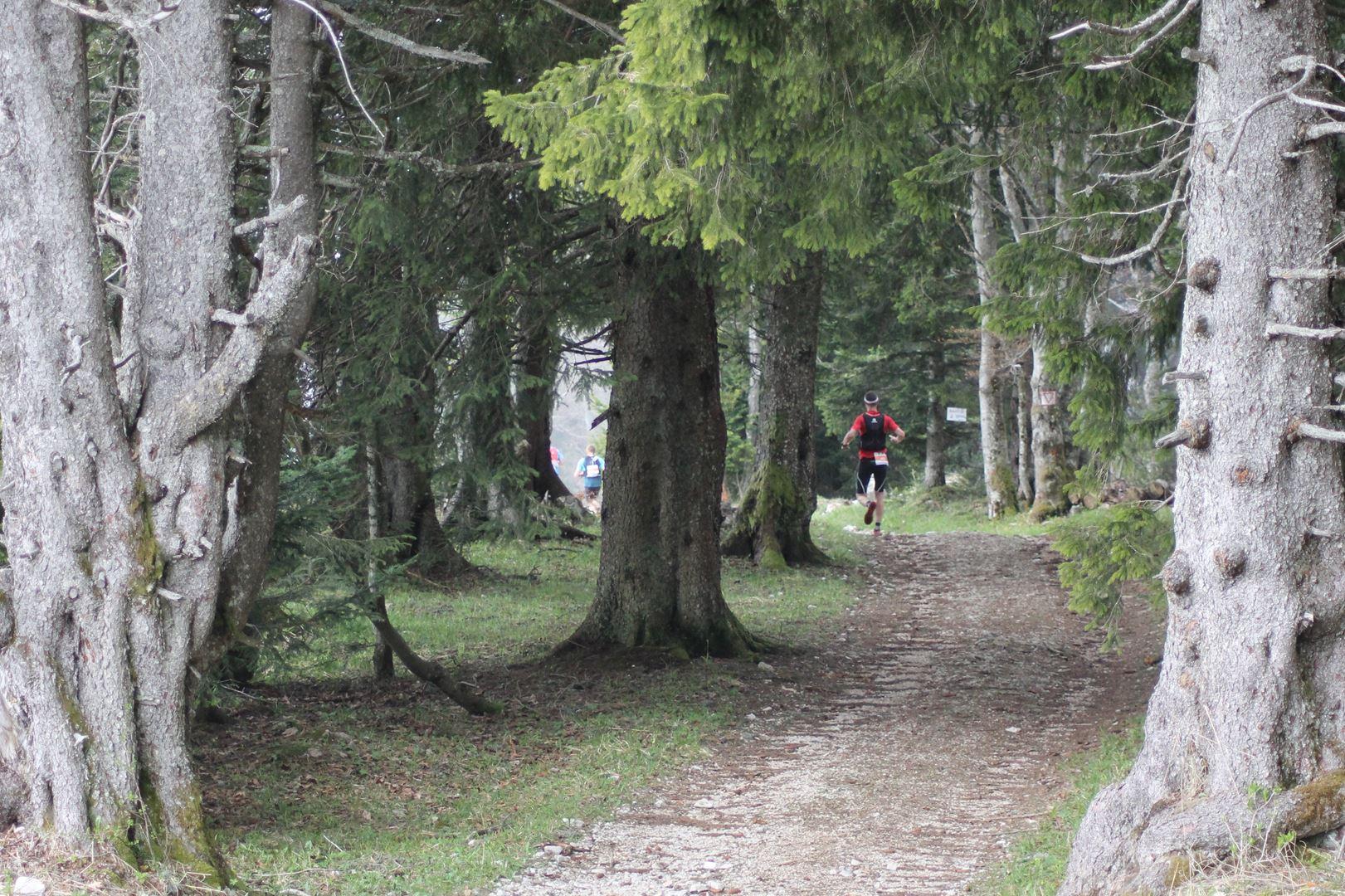 passage en forêt - RESULTATS ET PHOTOS DU TRAIL BE RUN - DUINGT (74)-AIX LES BAINS (73) - 14-05-2017
